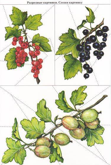разрезные картинки по теме грибы ягоды красоты королева, чёрствая