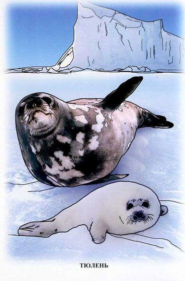 подпиши рисунки тюлень на льдине смогла простить измену